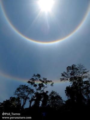 5 Penampakan Aneh di Hutan Amazon