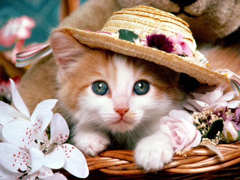 The Cute Cat Wallpaper for
