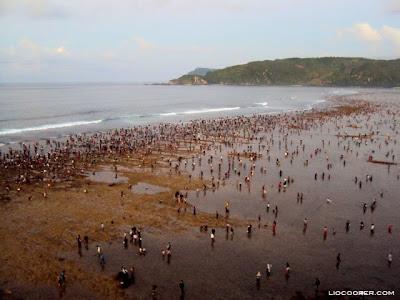 bau nyale, menangkap cacing, pantai kuta, lombok barat, nusa tenggala barat, wisata lombok
