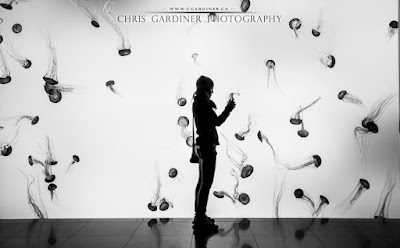sea nettles in the aquarium captured by chris gardiner photography www.cgardiner.ca