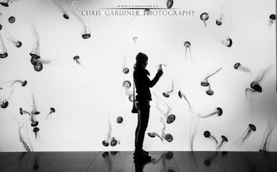 sea nettles in the aquarium captured by chris gardiner photography www.cgardiner.ca