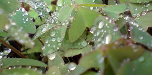 Y llegó la lluvia en Otoño.