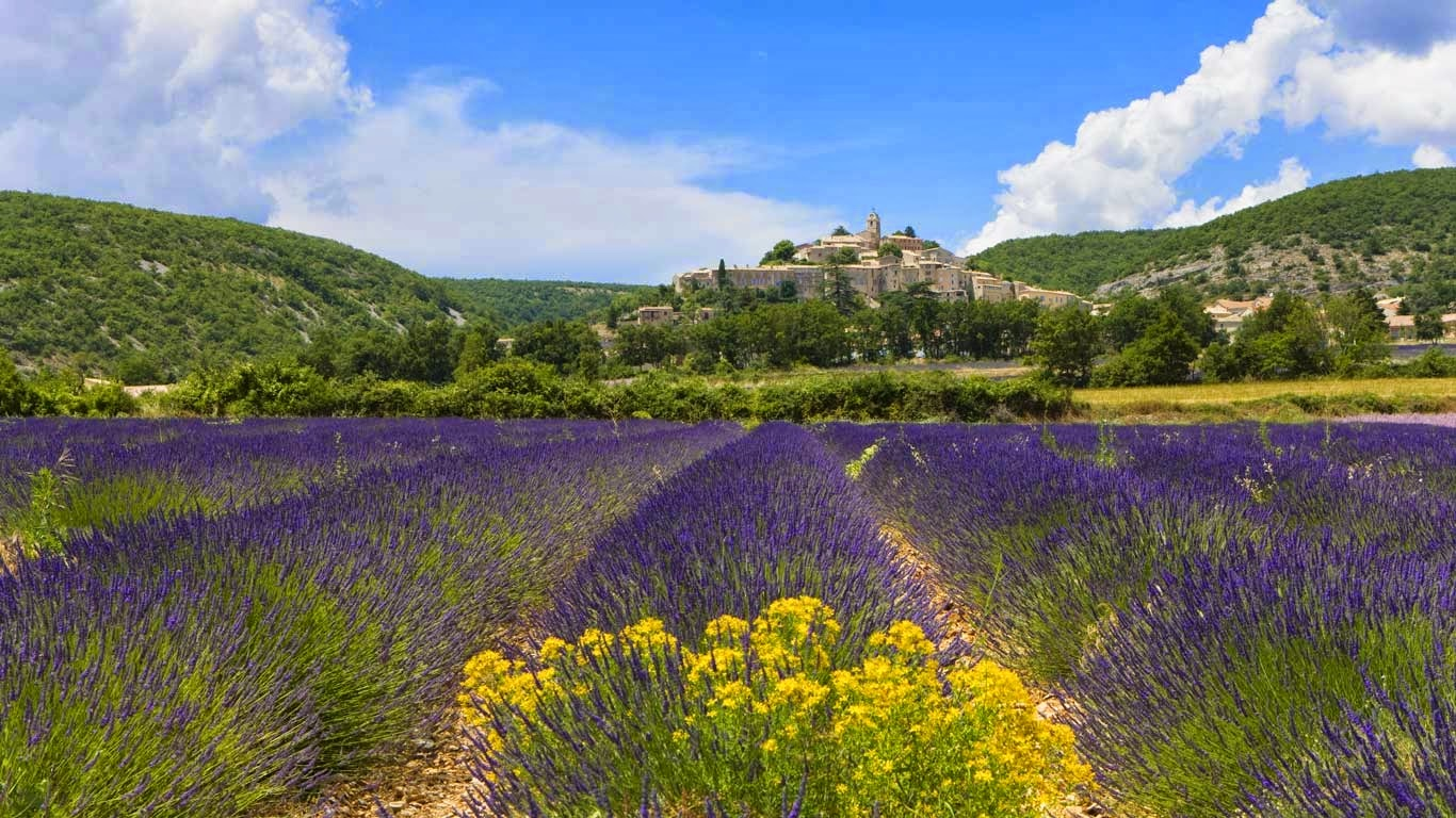 Lavender fields, Banon, France (© Roland Gerth/Corbis) 286