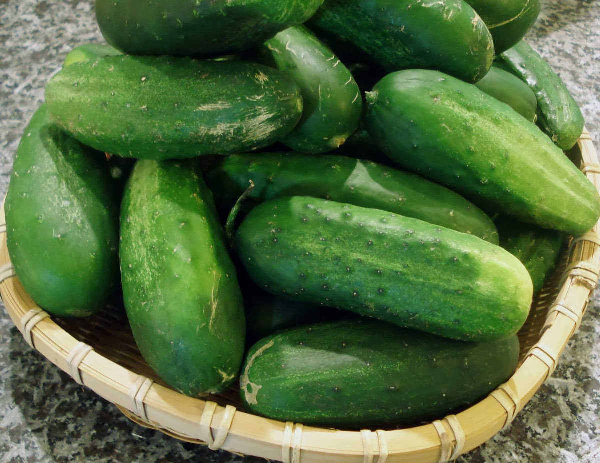 image Cucumber can be a sex toy
