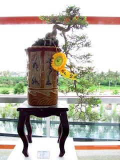 Bonsai, Mindanao, Desmodium, SM Lanang Premier, Kadayawan Festival, Home and Garden, Informal upright, Triple trunk, Cascading, Literati, Rock clasping, Slanting, Raft, One sided, Clump, Broom