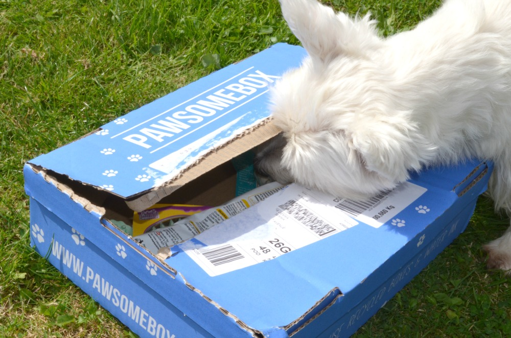 The Pawsome Box - a Subscription Box for Dogs!