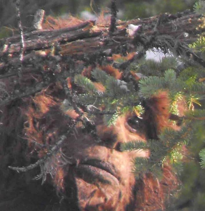 _origin_Bigfoot-jeb-2.jpg