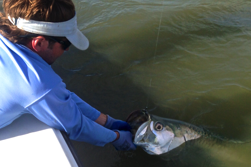 Myrtle beach fishing report tarpon have arrived in south for Myrtle beach fishing report