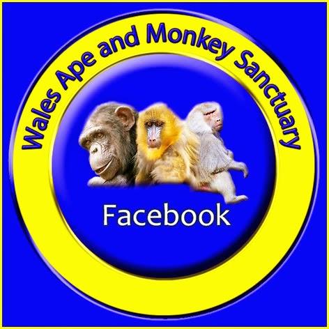 WAMS on Facebook