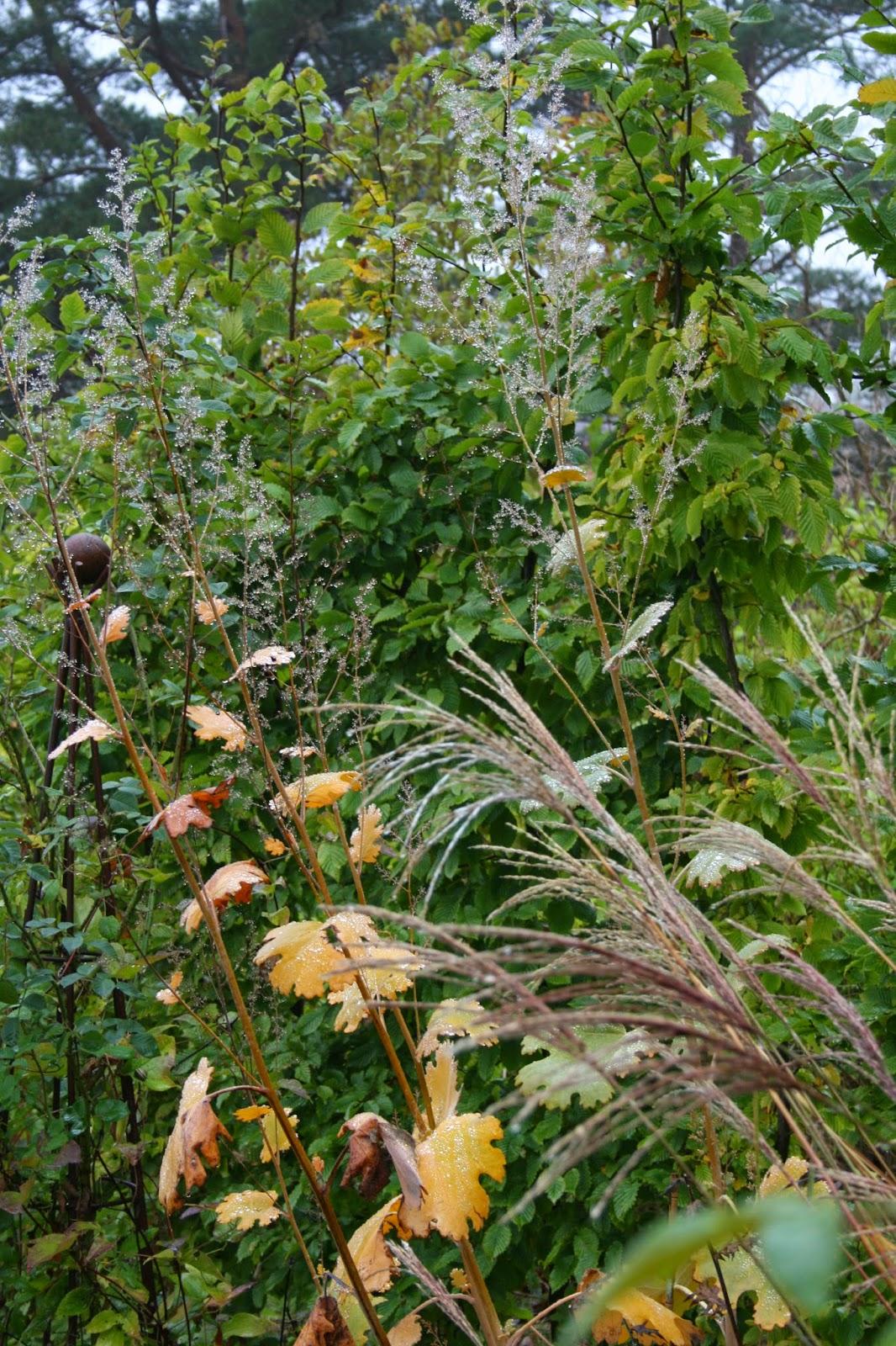 höstbild trädgården