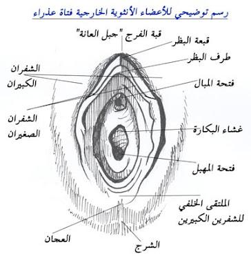 www.ma3loma1book.com