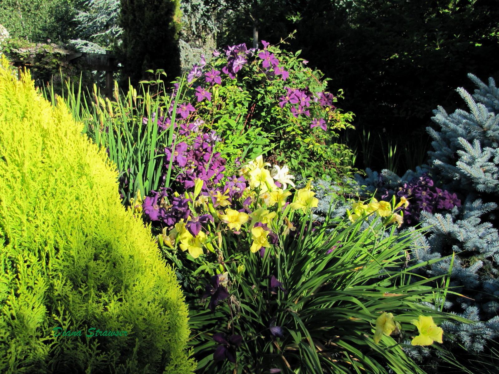 Voice In The Garden June 39 S Garden Gallery