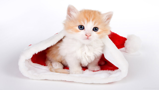 Free Download Cute Christmas Cat HD Wallpapers for iPhone 5