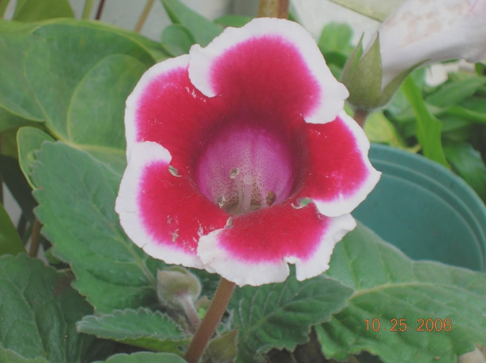 Arreglos florales plantas ornamentales for Algunas plantas ornamentales