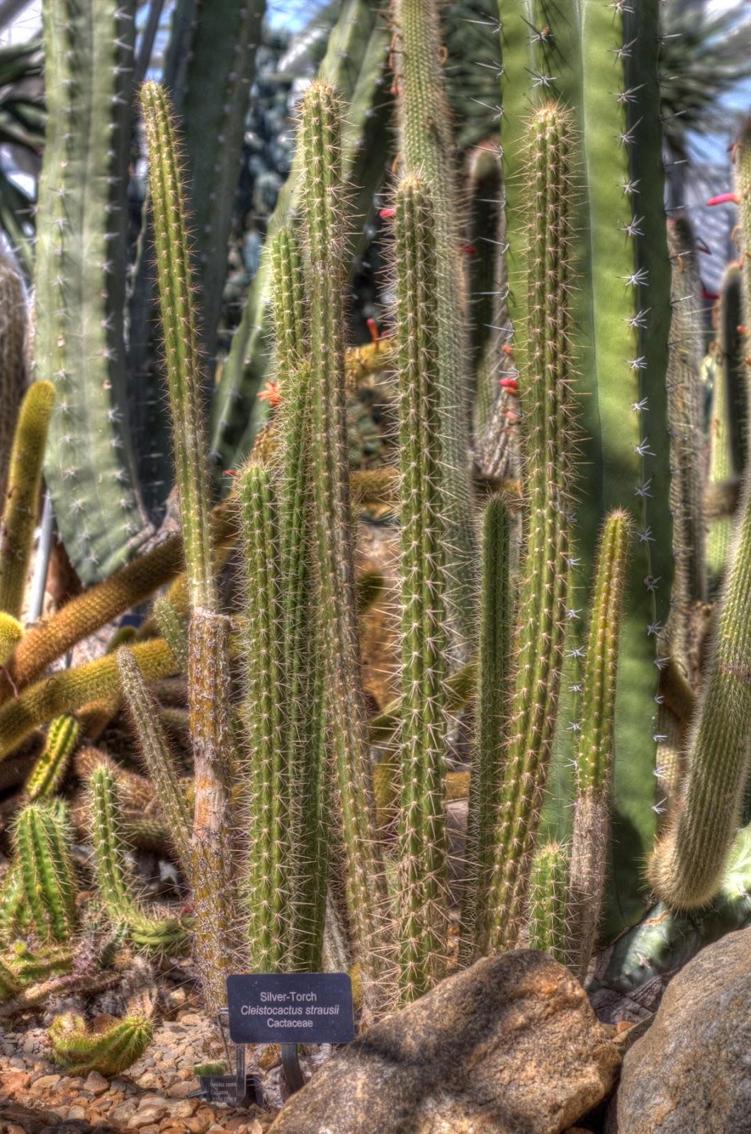 Photo Essay- Matthaei Botanical Gardens - On My Feet or In My Mind ...