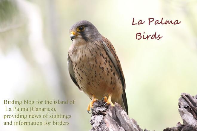 La Palma Birds