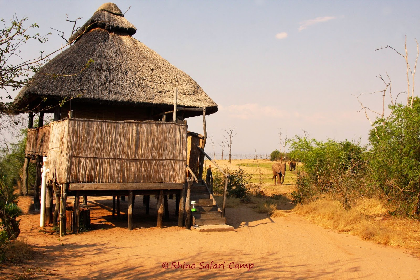 One of the rooms at Rhino Safari Camp, where elephants roam freely
