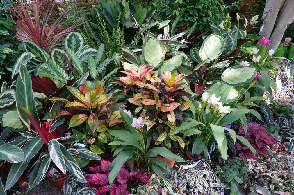 Orticola 2014 blossom zine blog for Ingegnoli piante