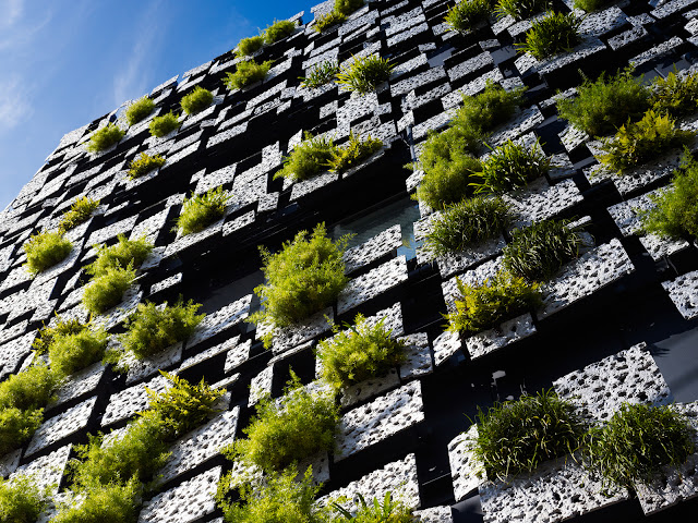 Photo of green wall facade looking up