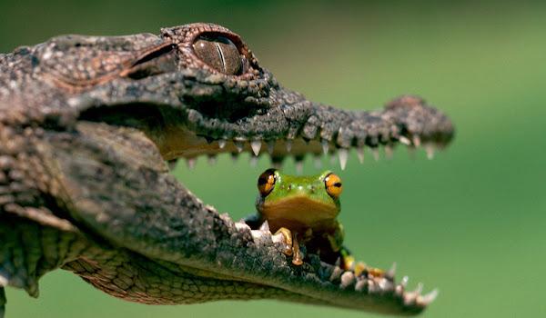 Sürüngen Hayvanların HD Resimleri