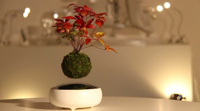 "Kickstarter project ""Air Bonsai"" combines together magnetic levitation, wee plants and traditional Japanese ""monozukuri"""