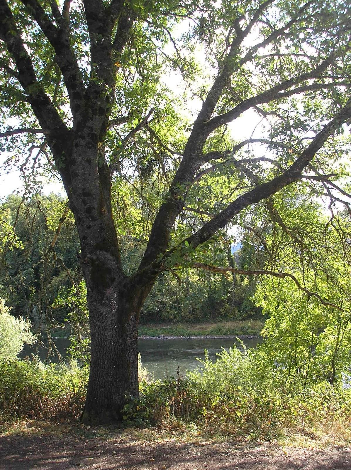 Various Tree Musings