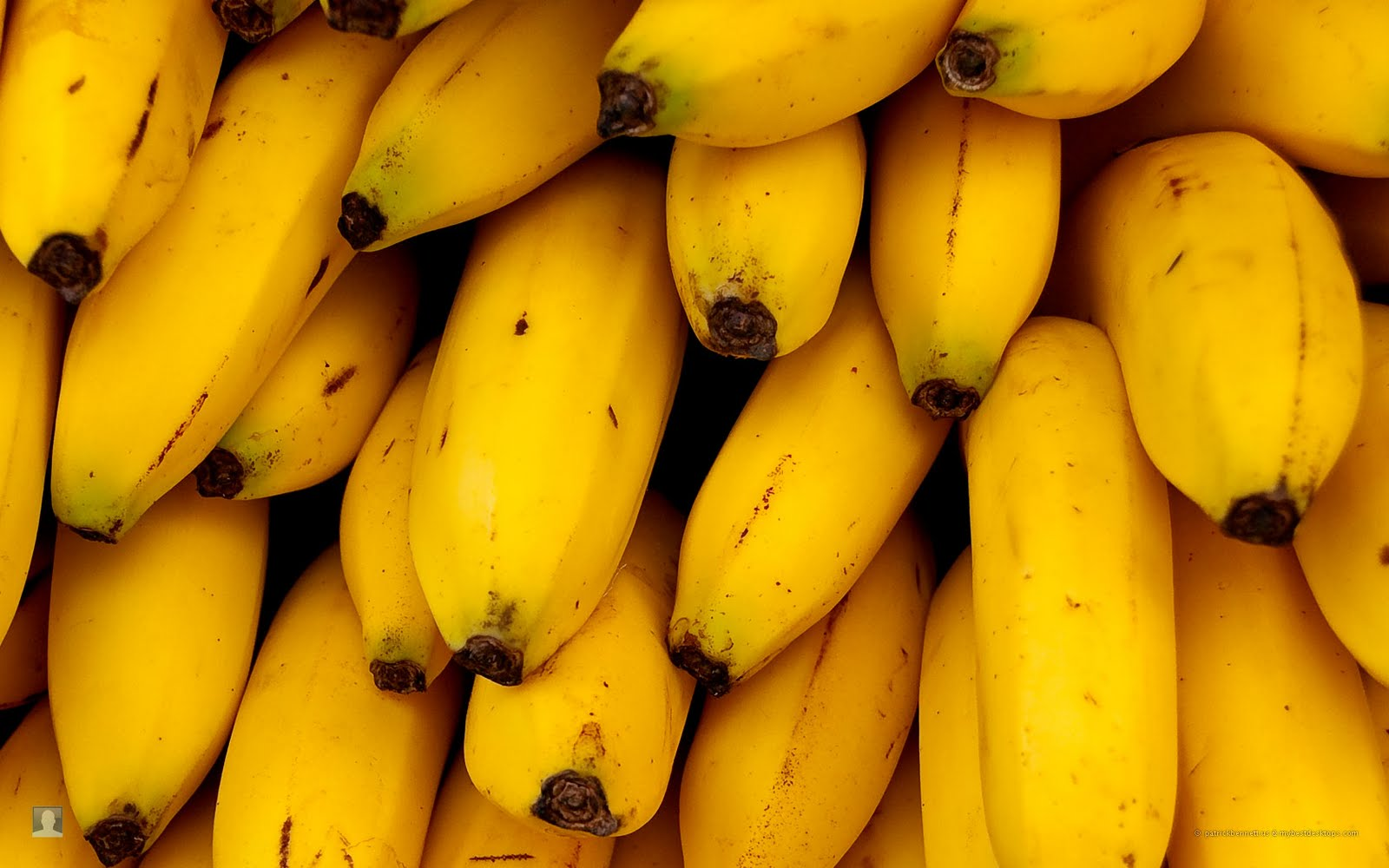 However, in November researchers at New York University reported that a chemical analysis of banana peel had found no intoxicating chemicals and that the high was mainly psychological. It was obvious at the time, at least to some of us, that the whole thing was a put-on.