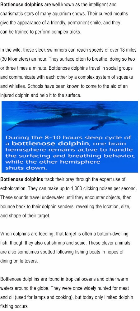 Bottle nose dolphins facts for kids