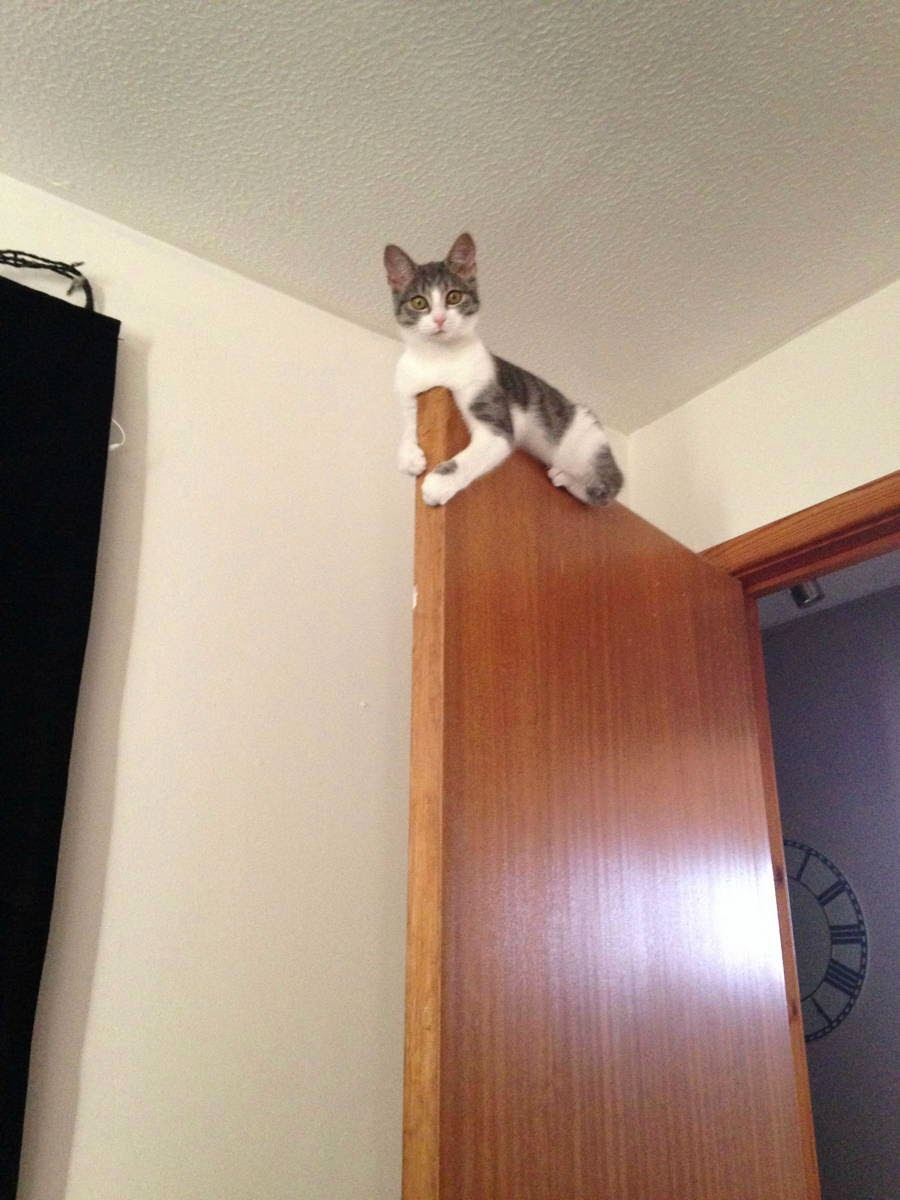 Funny cats - part 129 (40 pics + 10 gifs), cat picture, funny picture
