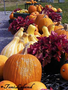 Pumpkins, Squash, and Coral Bells (Heuchera) at harvest by Toni Leland