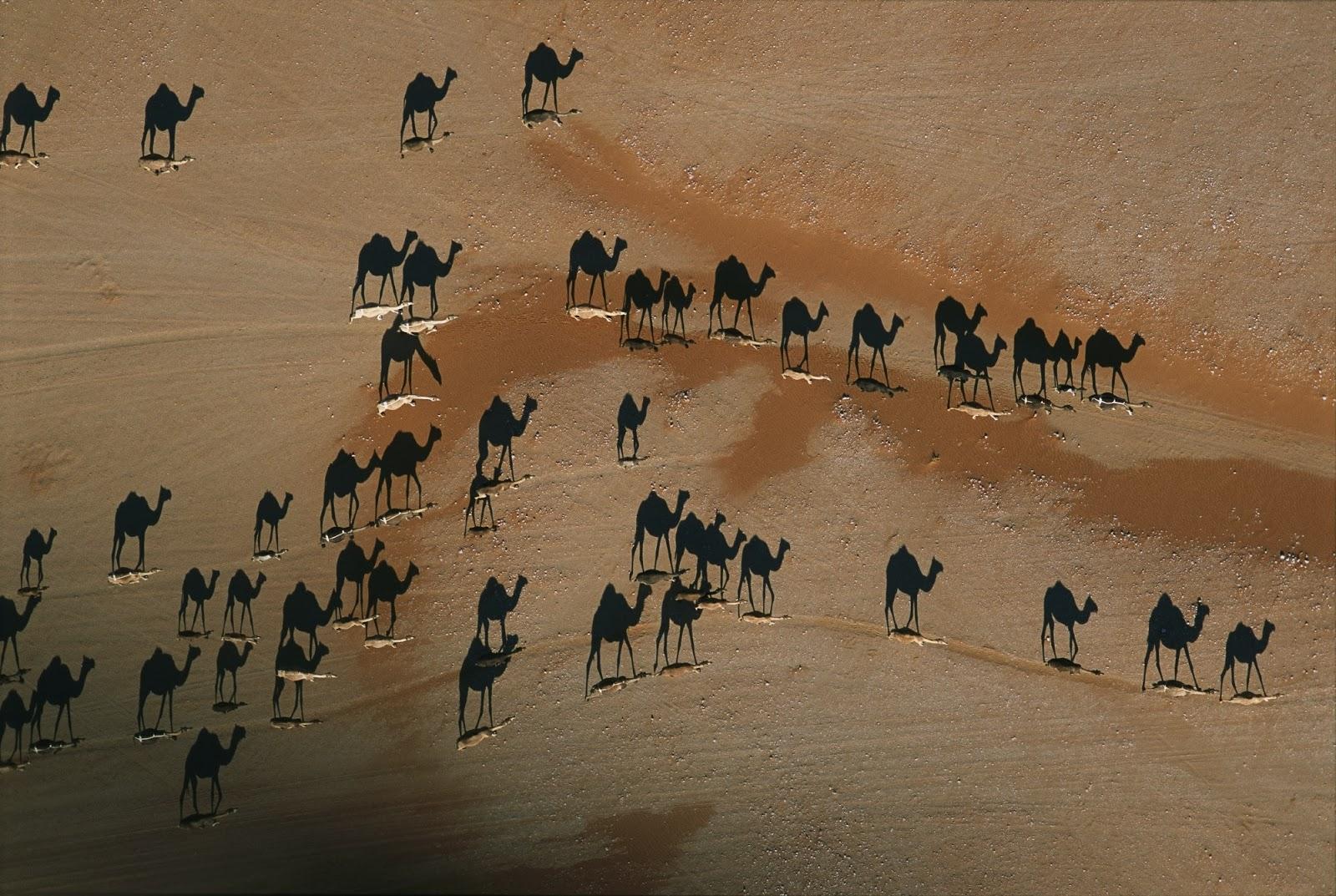 Μαύρες καμήλες; Αδύνατον!