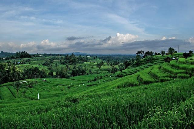 Objek wisata Jatiluwih di Bali