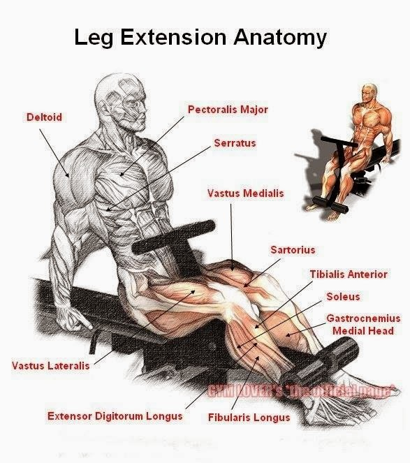 The Squatless Leg Workout All Bodybuilding Com