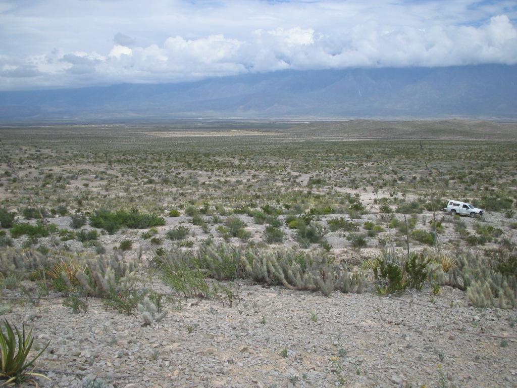 xerosoles en el desierto de coahuila foto tomada de aqu