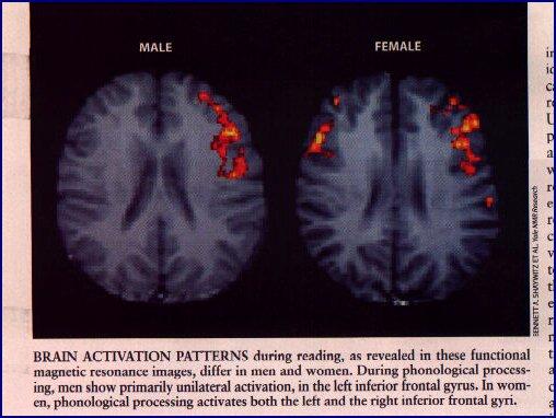 Нейронный пол: не все одинаково мужественные и женственные и это нормально (+тест).