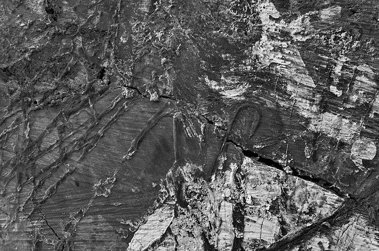 Topo de um tronco com resina da seiva