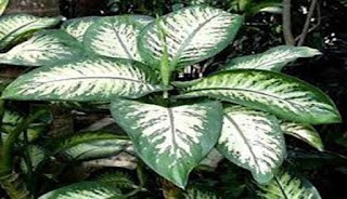 tanaman hijau