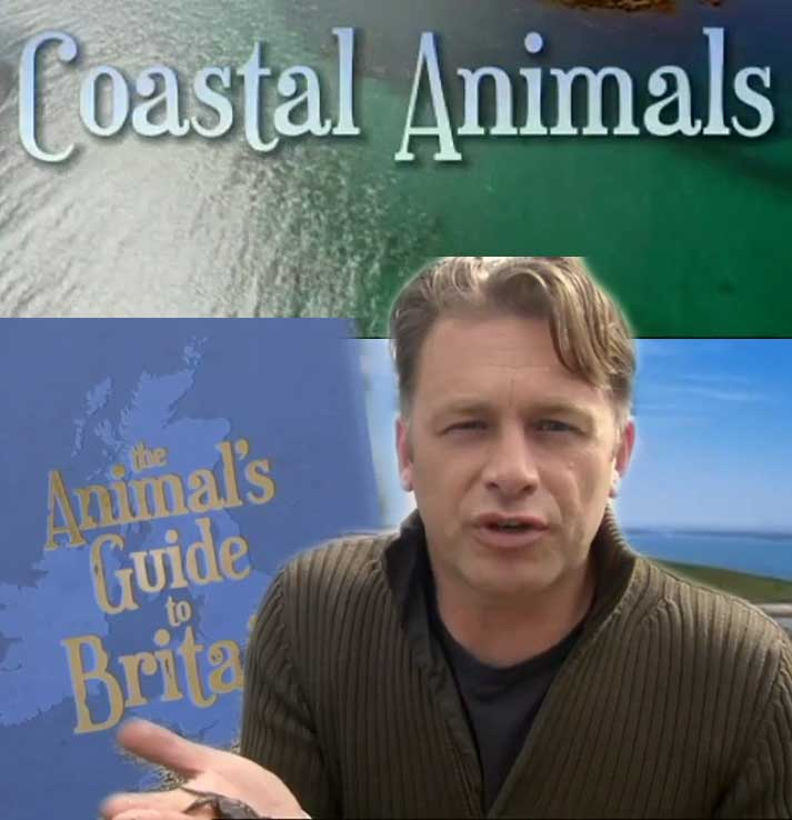 Coastal Animals
