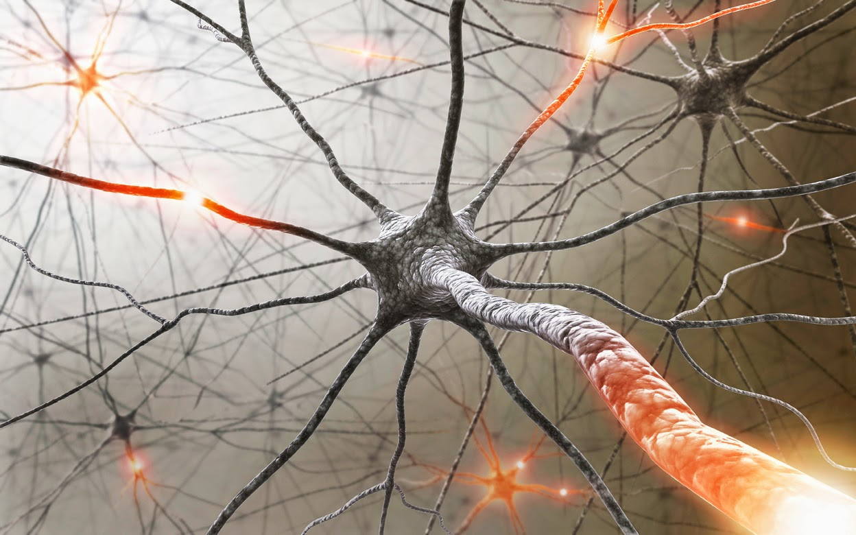 Chemical Compound That Decreases Effects Of Multiple Sclerosis Identified