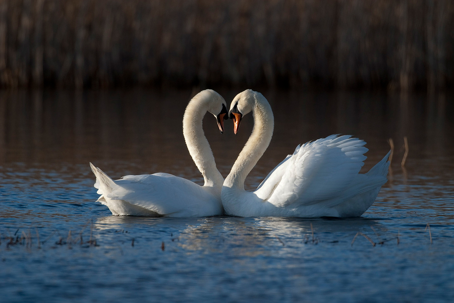 40 Beautiful Love Birds Wallpapers