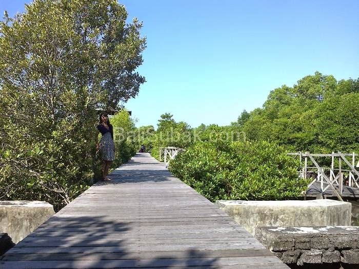 Mangrove forest conservation in Benoa Bay