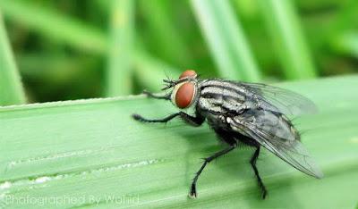 kisah seseorang yang masuk neraka akibat seekor lalat