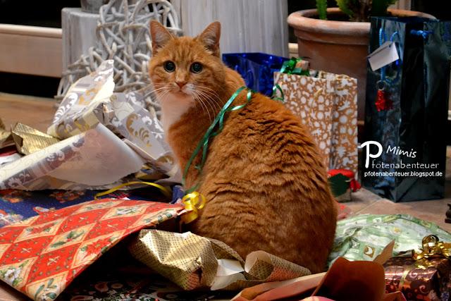 Katze Mimi sitzt an Heiligabend im Geschenkpapier