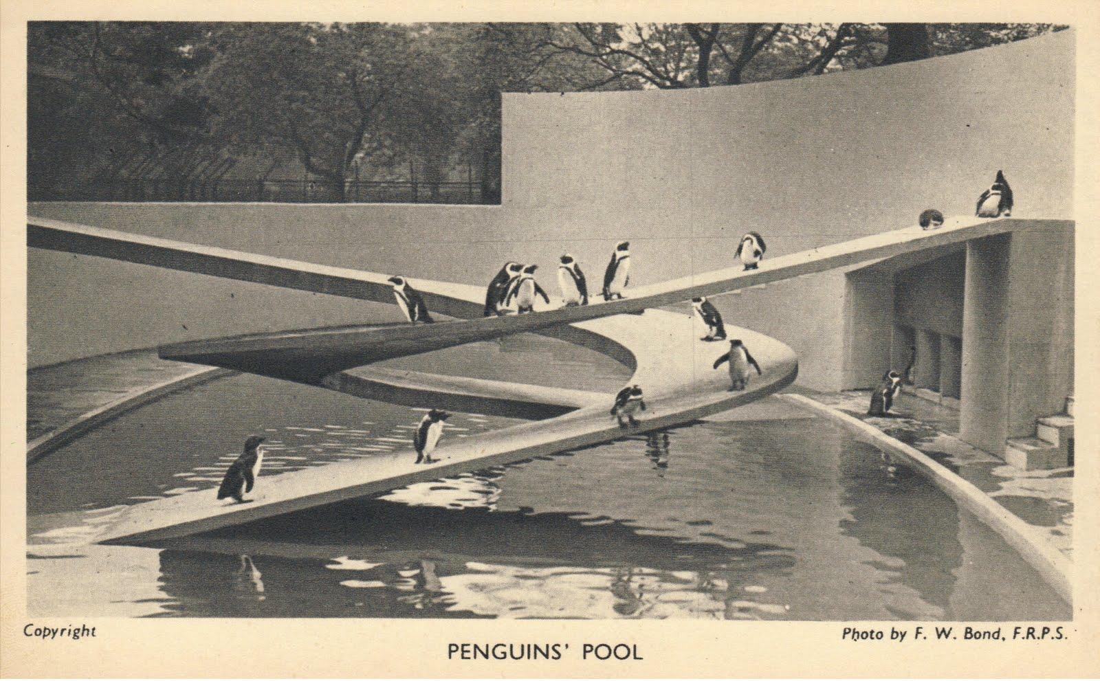 penguin pool bad design concrete