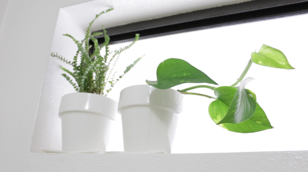 Grow Tiny Houseplants On Your Windowsill