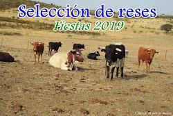 SELECCIÓN DE RESES (Fiestas 2019)