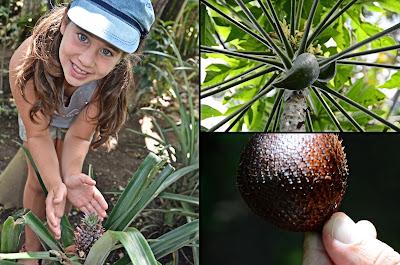 tour risaie e giardino botanico 2013 rebeccatrex