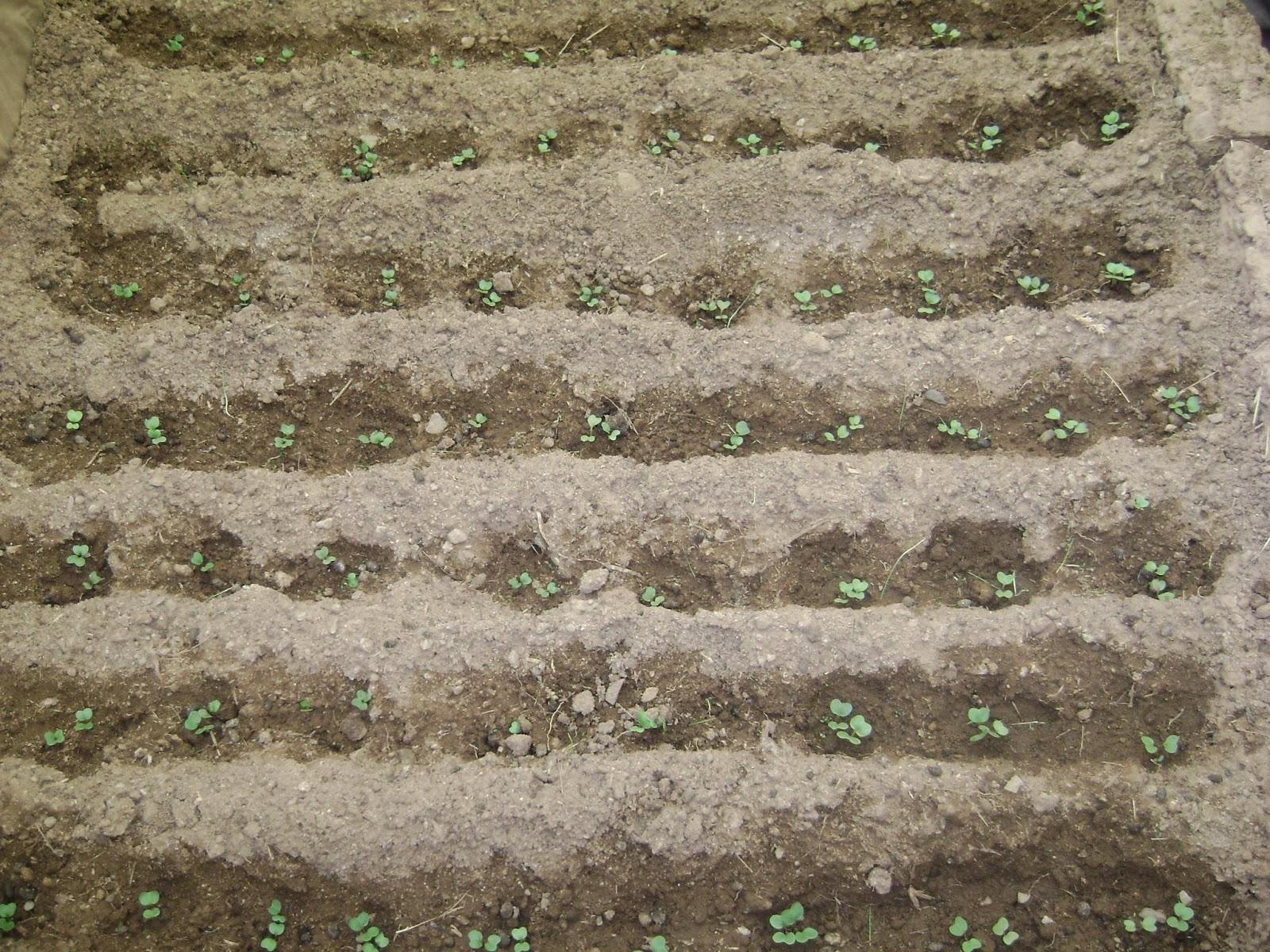 Agricultura urbana en el alto manual producci n de - Preparacion de la tierra para sembrar ...