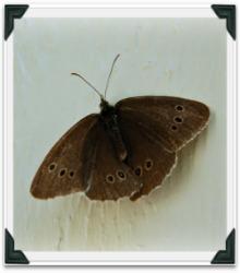 Låna gärna mina bilder och idéer från min blogg!