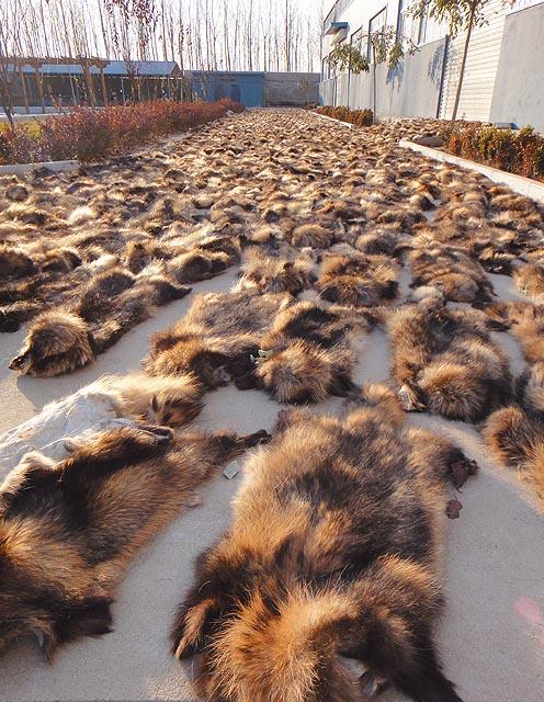 Pelo woolrich che animale è